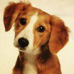 koirat puuvillakangas